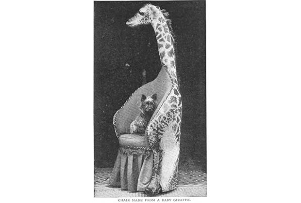 Стул из жирафа